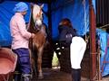調教されたエリート乗馬騎手 吉沢明歩3